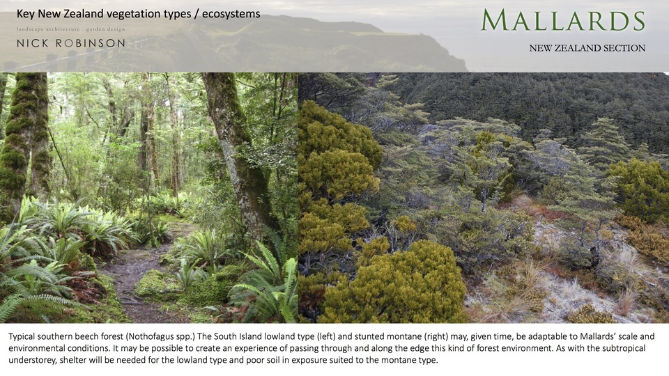 Southern beech forest shows strong spatial and visual character.