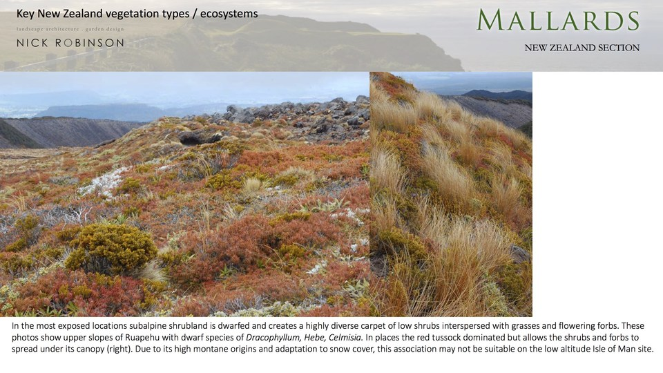 Low alpine vegetation shows a typical structure which can be reproduced using suitable plants for an exposed lowland coastal situation
